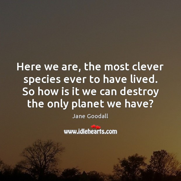 Here we are, the most clever species ever to have lived. So Jane Goodall Picture Quote