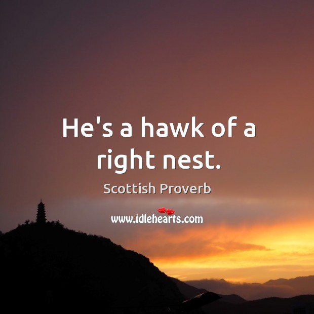 He's a hawk of a right nest. Image