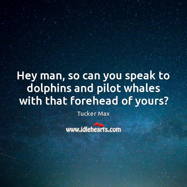 Hey man, so can you speak to dolphins and pilot whales with that forehead of yours? Tucker Max Picture Quote