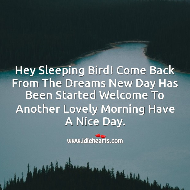 Hey sleeping bird! come back from the dreams Image