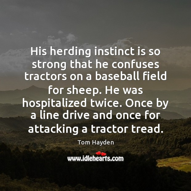 His herding instinct is so strong that he confuses tractors on a Image