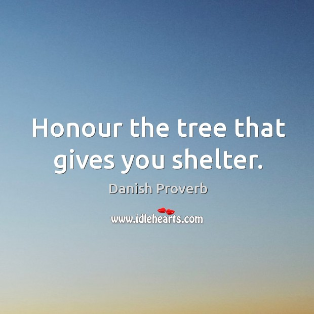 Honour the tree that gives you shelter. Danish Proverbs Image