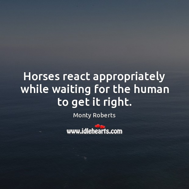 Image, Horses react appropriately while waiting for the human to get it right.