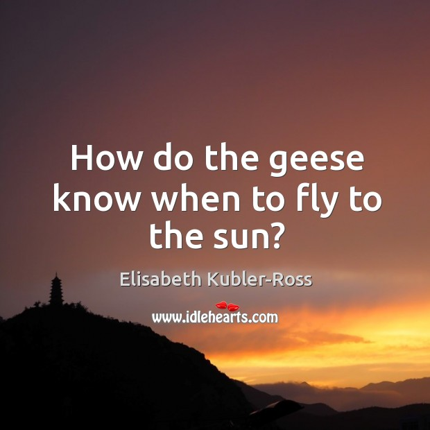 Image, How do the geese know when to fly to the sun?