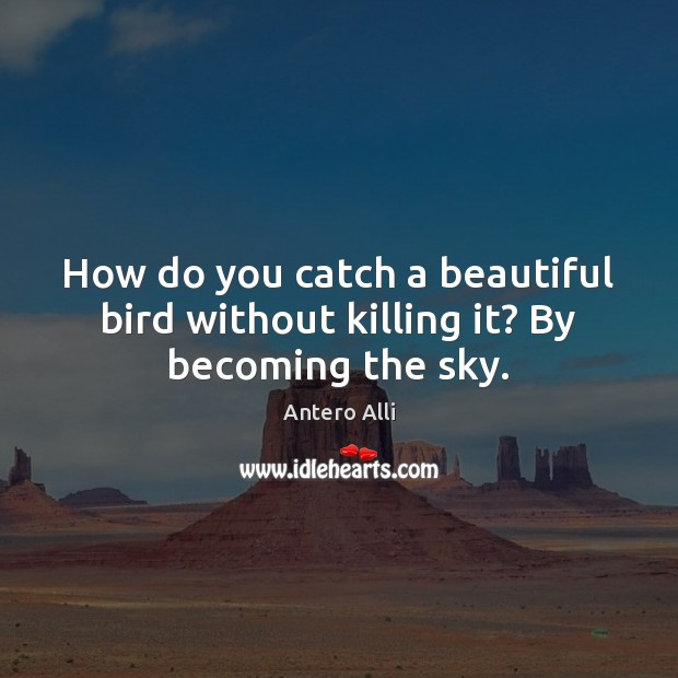 Image, How do you catch a beautiful bird without killing it? By becoming the sky.