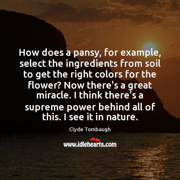 How does a pansy, for example, select the ingredients from soil to Image