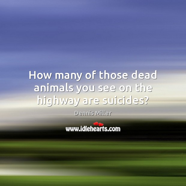 How many of those dead animals you see on the highway are suicides? Dennis Miller Picture Quote