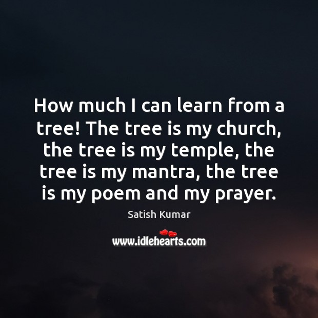 How much I can learn from a tree! The tree is my Satish Kumar Picture Quote