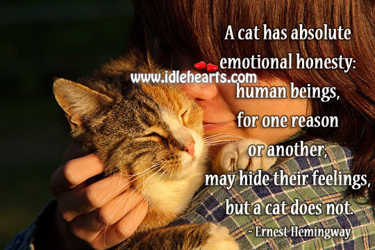 A cat has absolute emotional honesty Image