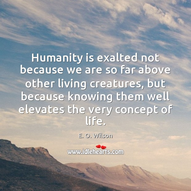 Humanity is exalted not because we are so far above other living E. O. Wilson Picture Quote