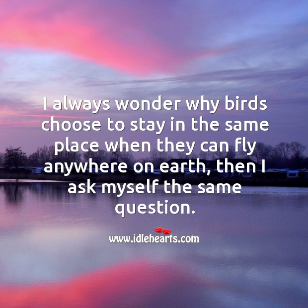 I always wonder why birds choose to stay in the same place. Image