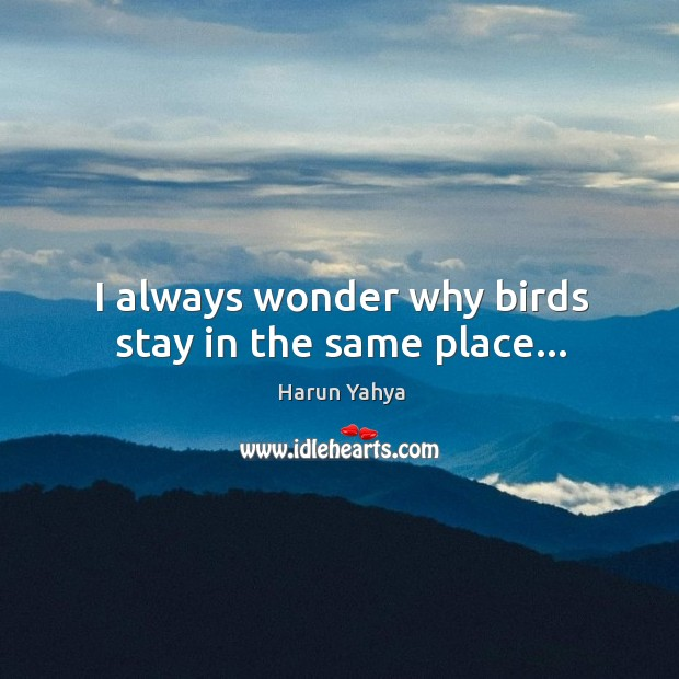 I always wonder why birds stay in the same place… Image