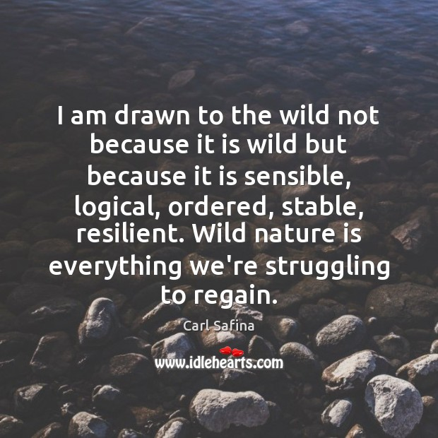 I am drawn to the wild not because it is wild but Image
