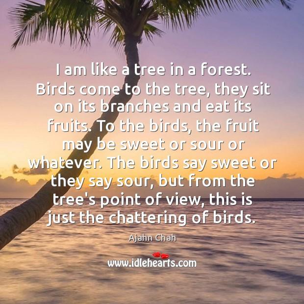 I am like a tree in a forest. Birds come to the Image