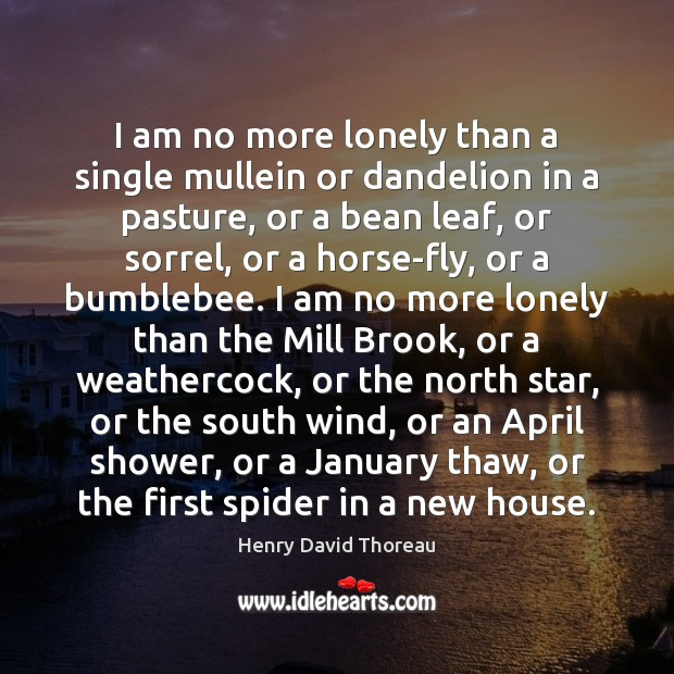 Image, I am no more lonely than a single mullein or dandelion in