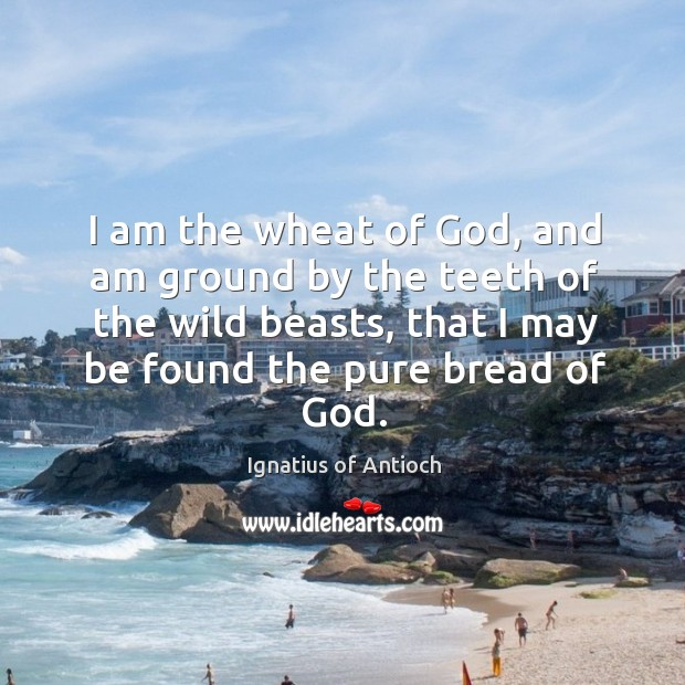 I am the wheat of God, and am ground by the teeth Image