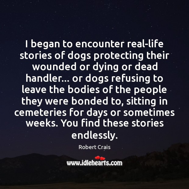I began to encounter real-life stories of dogs protecting their wounded or Robert Crais Picture Quote