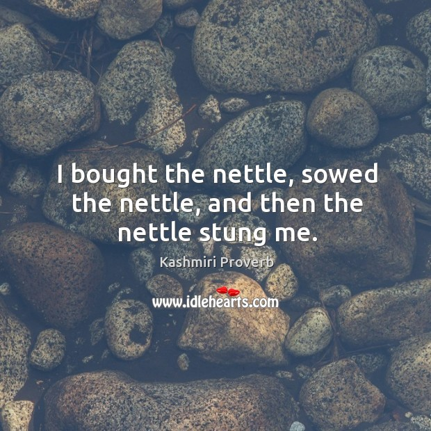 I bought the nettle, sowed the nettle, and then the nettle stung me. Kashmiri Proverbs Image