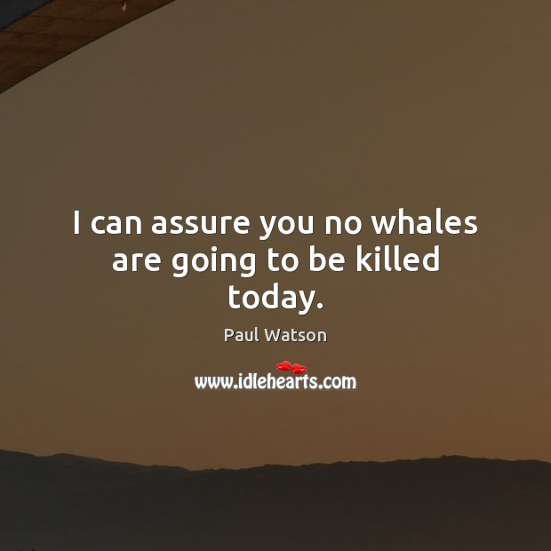 I can assure you no whales are going to be killed today. Paul Watson Picture Quote