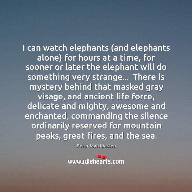 I can watch elephants (and elephants alone) for hours at a time, Image