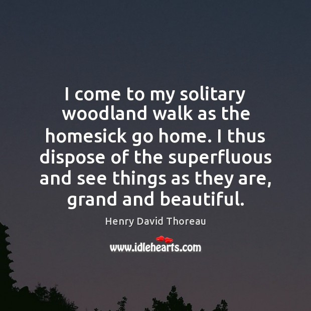 I come to my solitary woodland walk as the homesick go home. Image