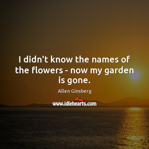 Image, I didn't know the names of the flowers – now my garden is gone.