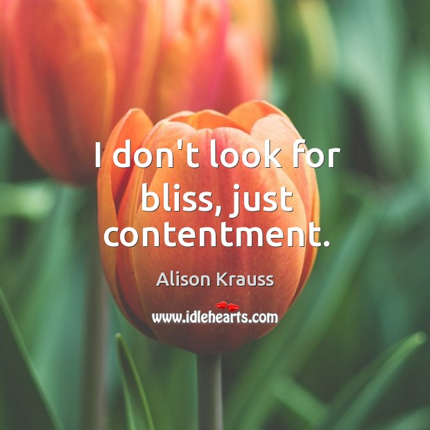 I don't look for bliss, just contentment. Alison Krauss Picture Quote
