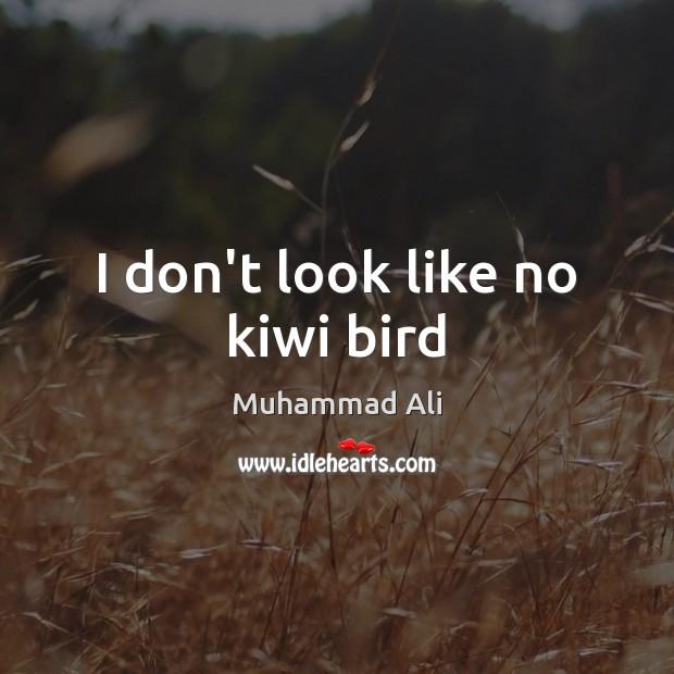 I don't look like no kiwi bird Image
