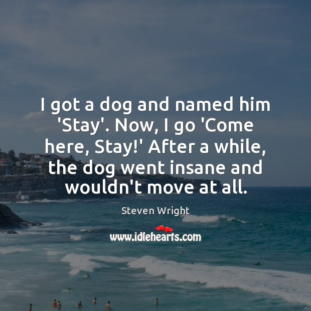 I got a dog and named him 'Stay'. Now, I go 'Come Image