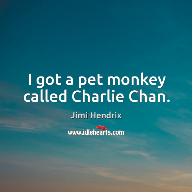 I got a pet monkey called charlie chan. Image