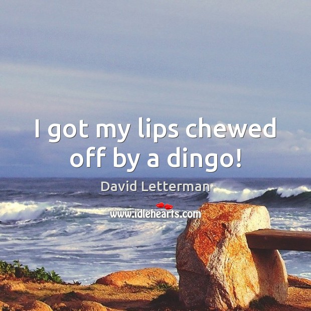 I got my lips chewed off by a dingo! David Letterman Picture Quote
