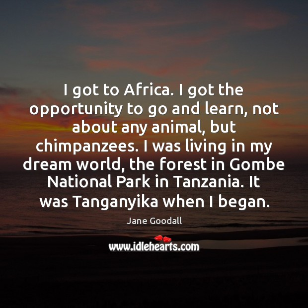 I got to Africa. I got the opportunity to go and learn, Jane Goodall Picture Quote