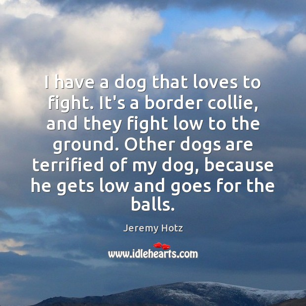I have a dog that loves to fight. It's a border collie, Image