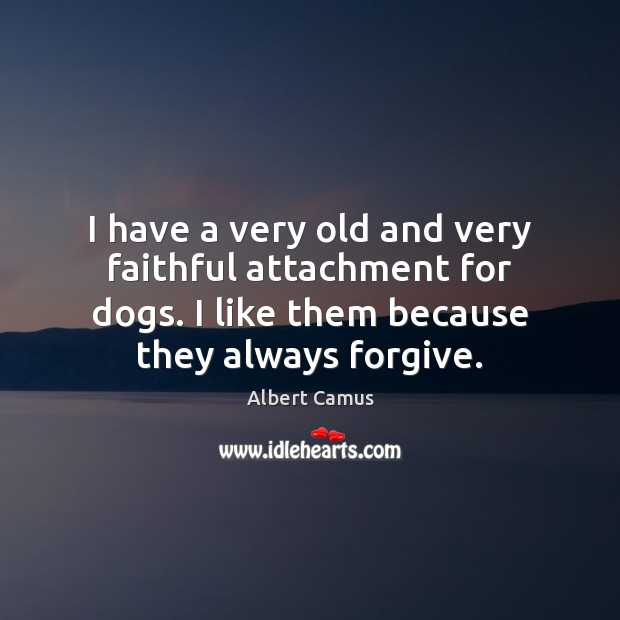 Image, I have a very old and very faithful attachment for dogs. I