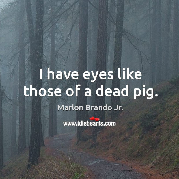 I have eyes like those of a dead pig. Image