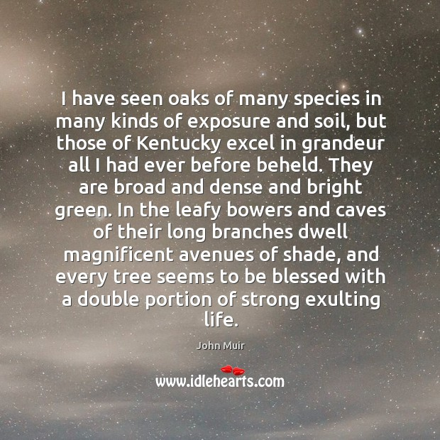 I have seen oaks of many species in many kinds of exposure Image