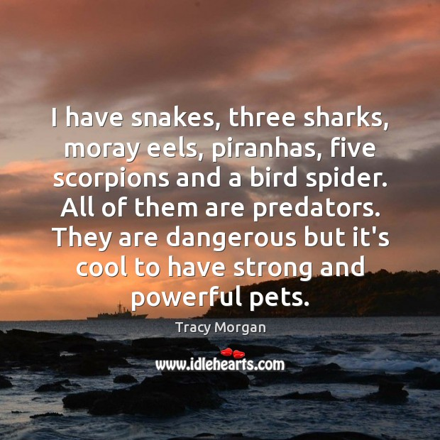 Image, I have snakes, three sharks, moray eels, piranhas, five scorpions and a