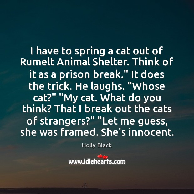 Image, I have to spring a cat out of Rumelt Animal Shelter. Think