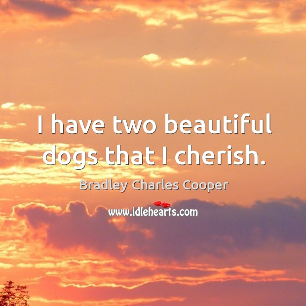 Image, I have two beautiful dogs that I cherish.