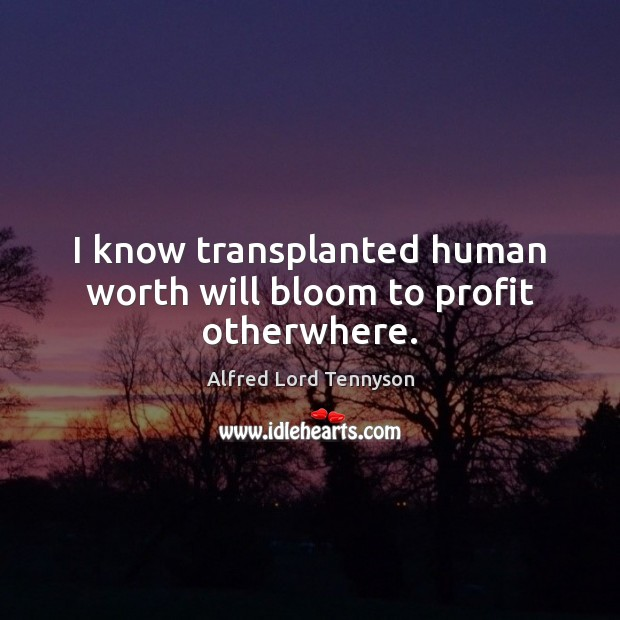 Image, I know transplanted human worth will bloom to profit otherwhere.