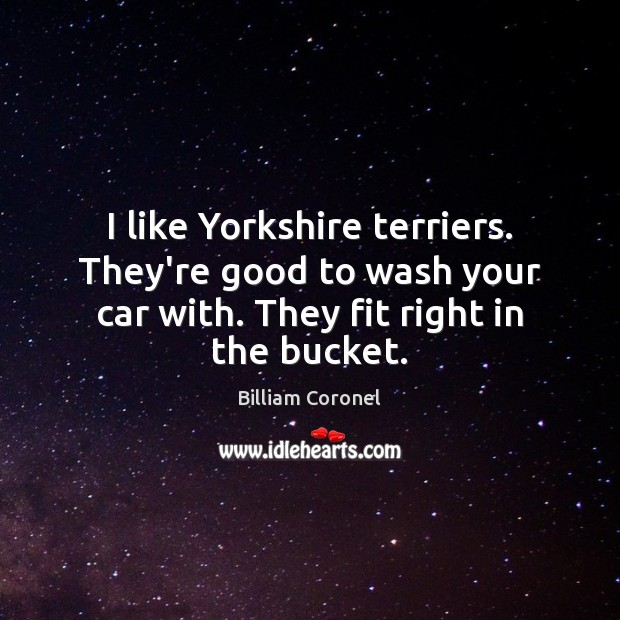 Image, I like Yorkshire terriers. They're good to wash your car with. They
