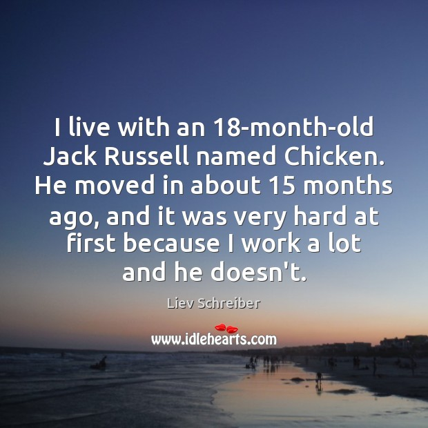 I live with an 18-month-old Jack Russell named Chicken. He moved in Liev Schreiber Picture Quote