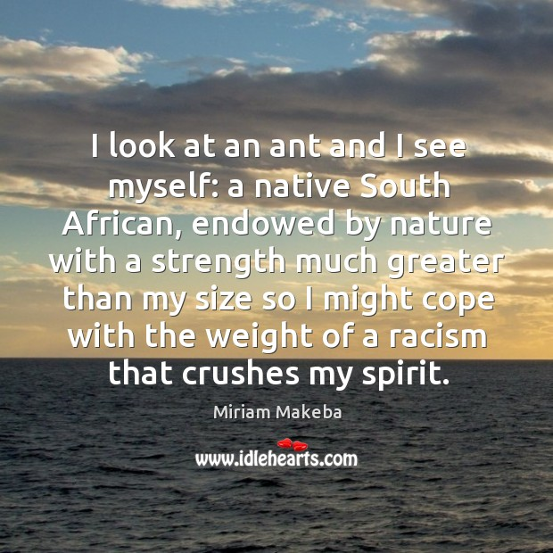 I look at an ant and I see myself: a native south african Image