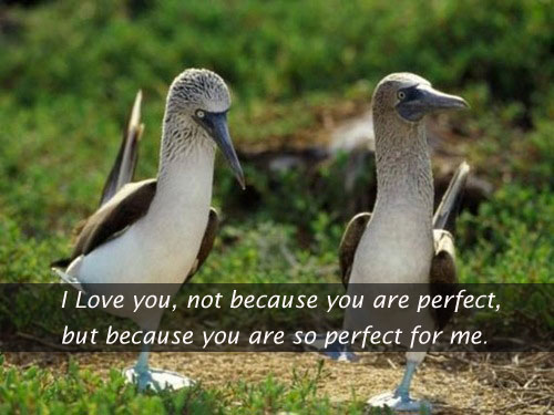 I Love You Because You Are So Perfect For Me