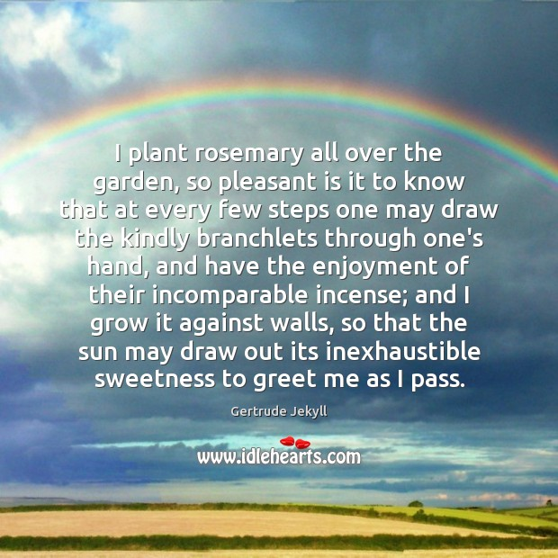 I plant rosemary all over the garden, so pleasant is it to Gertrude Jekyll Picture Quote