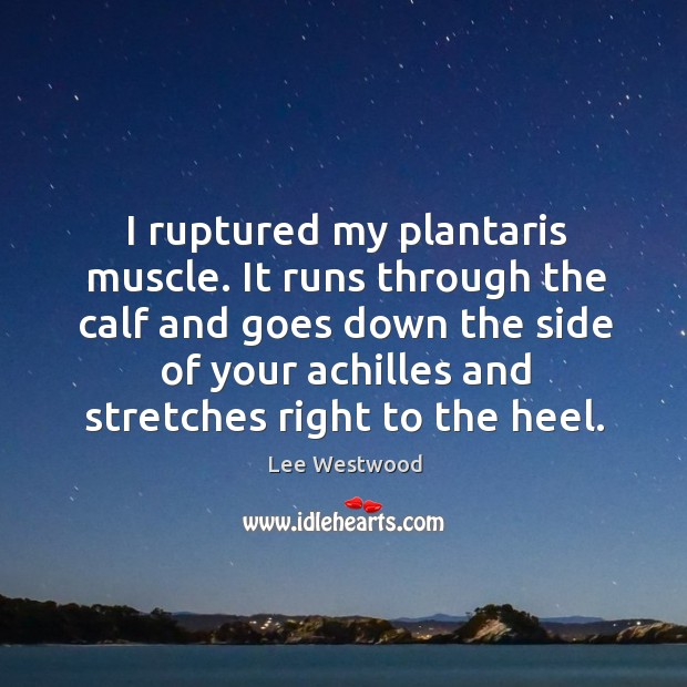 I ruptured my plantaris muscle. It runs through the calf and goes down the side Lee Westwood Picture Quote