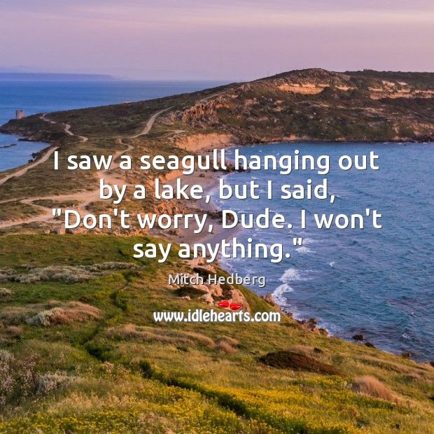 "I saw a seagull hanging out by a lake, but I said, "" Mitch Hedberg Picture Quote"