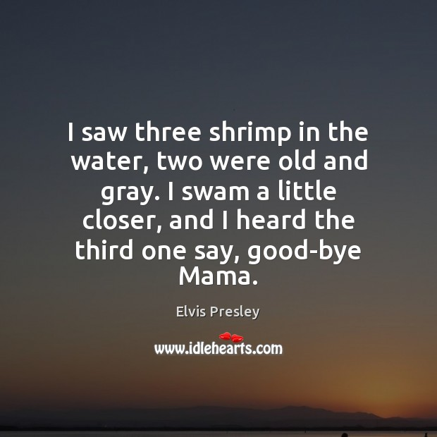I saw three shrimp in the water, two were old and gray. Image