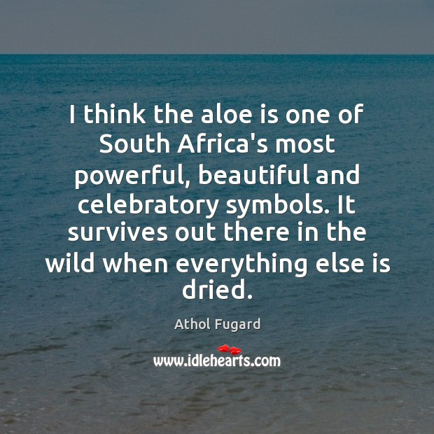Image, I think the aloe is one of South Africa's most powerful, beautiful