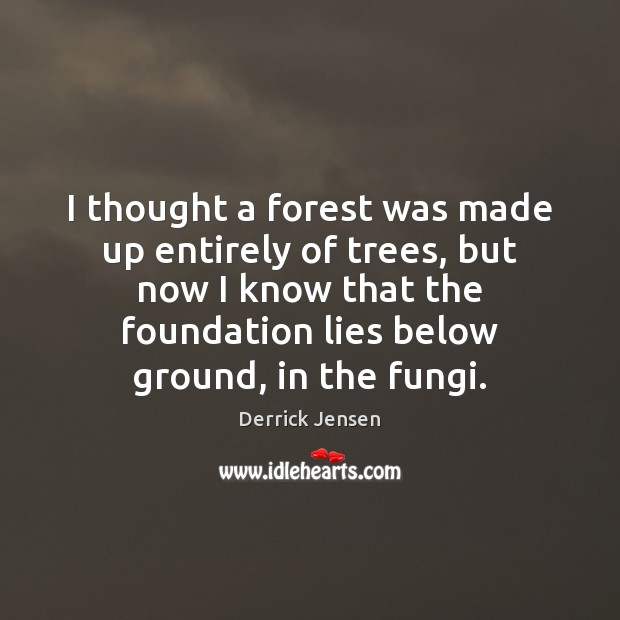 Image, I thought a forest was made up entirely of trees, but now
